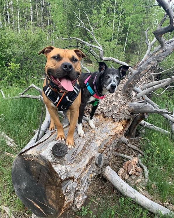 Dog on a Tree  Stump